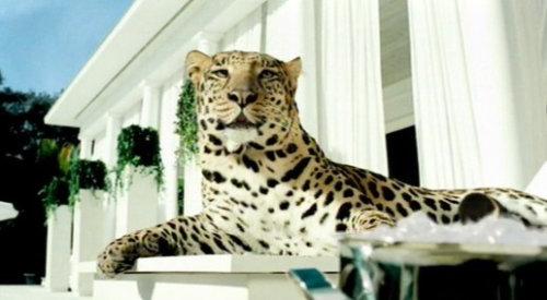 Ilustração leopardo