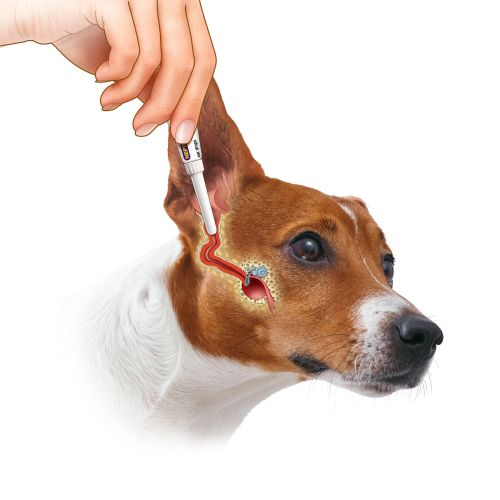 Medical ear medication for dog