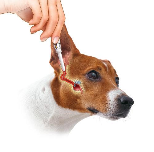 Medical ear medication for dog