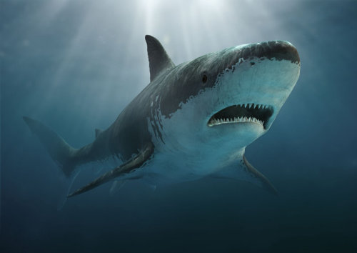 Cgi design of Prehistoric shark