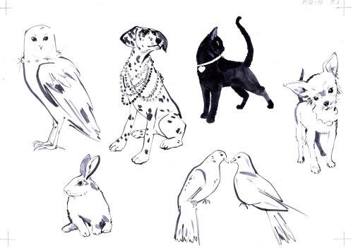 Illustration d'animaux de compagnie
