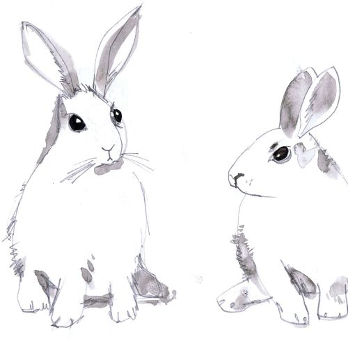 Illustration of Rabbits