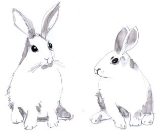 Illustration of Rabbits