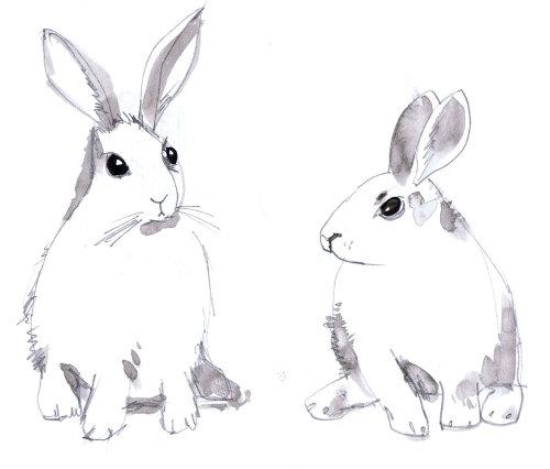 Illustration de lapins