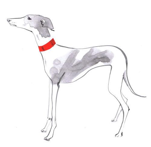 Illustration d'un chien