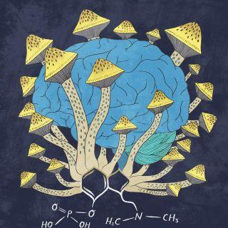 The Pharmaceutical Journey Conceptual Magic Mushrooms
