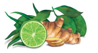 An Illustration of Lime and Ginger
