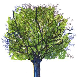 Tree | Nature illustration collection