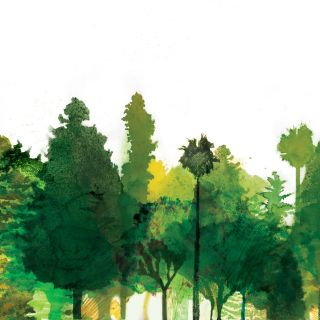 An illustration of trees