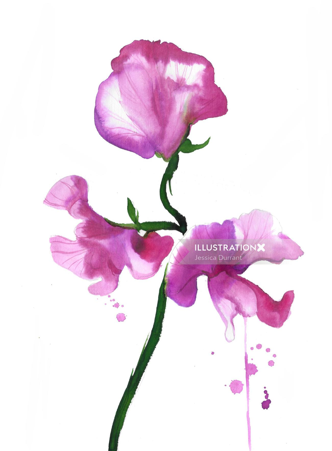 Watercolor flower sweet pea