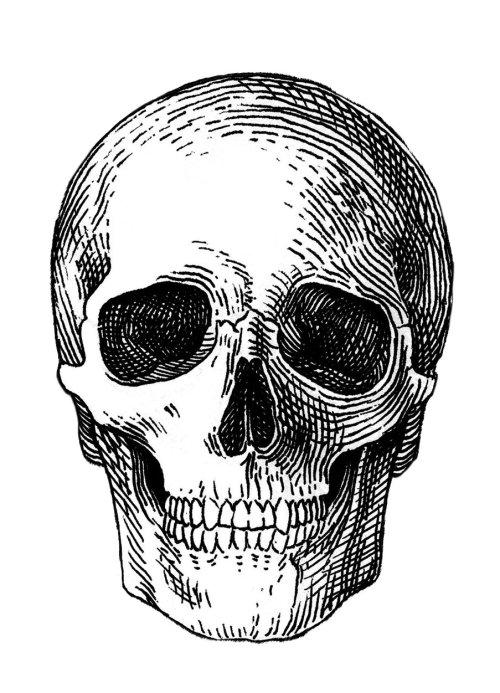 Sketch art of skull