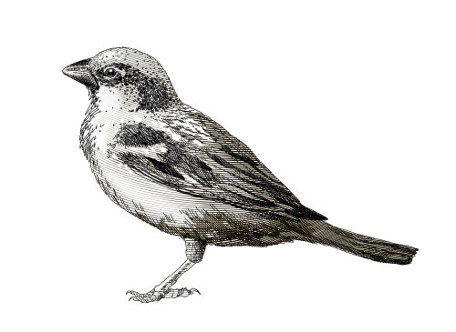 Black and white art of crow