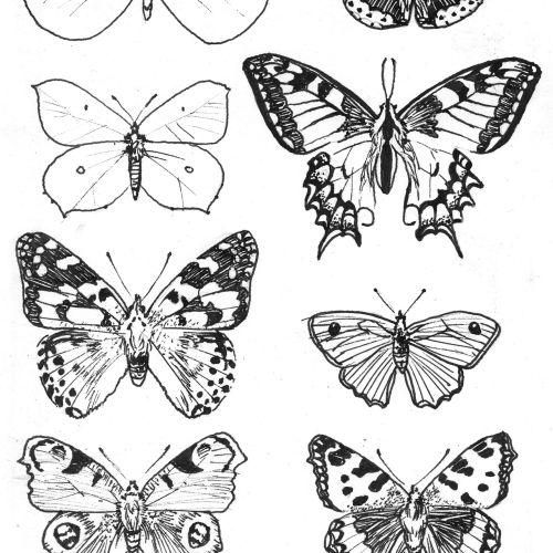 Jessine Hein Black & White Illustrator from Germany