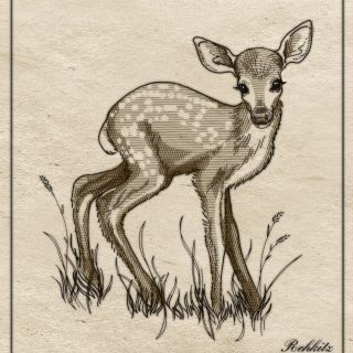 book illustration of deer