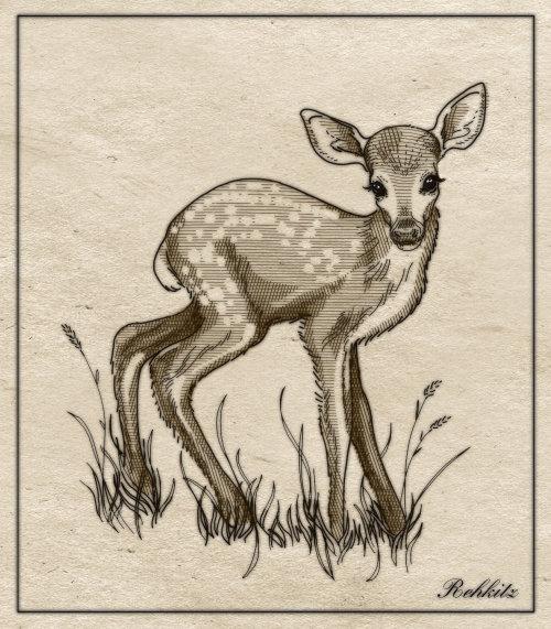 book illustration of deer