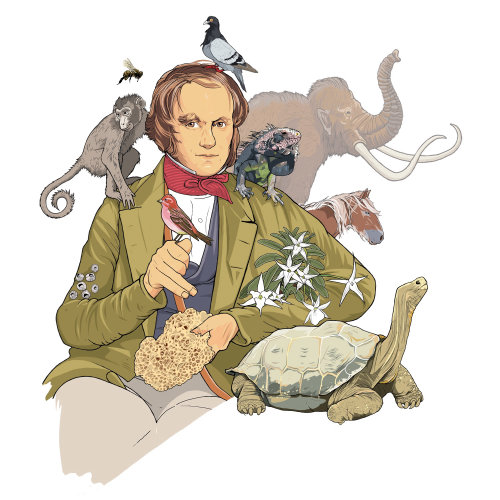 Charles Darwin Evolução Teórica
