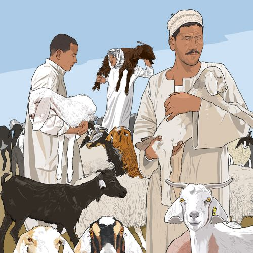 Lamb, Sheep market illustration