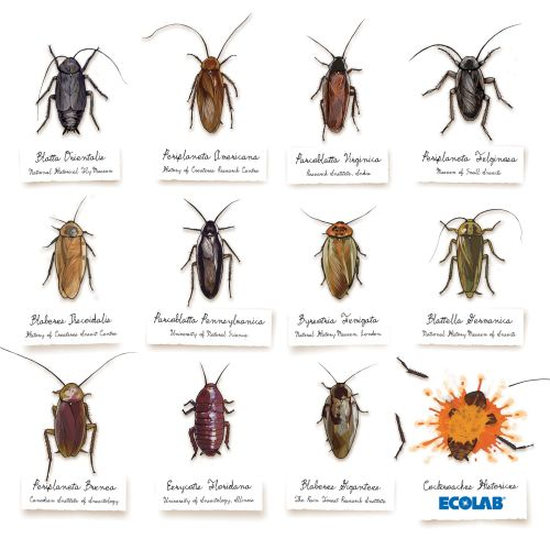 Illustration of diffrent insects by Jonathan Allardyce