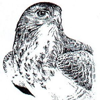 Jürgen Willbarth Animals