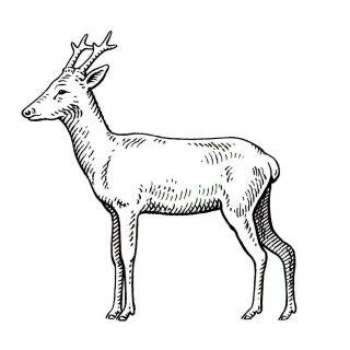 Jürgen Willbarth illustrator - animal illustration