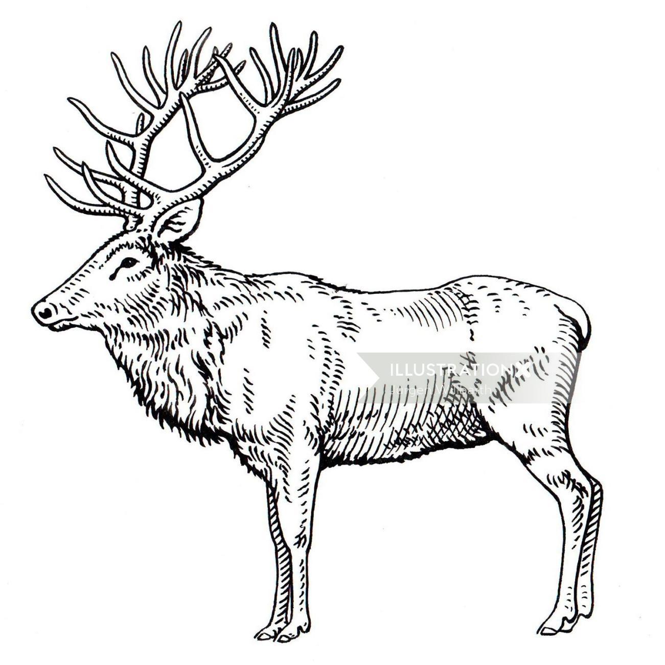 Elk animal black and white illustration
