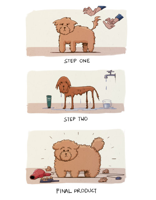 宠物狗的淋浴结果
