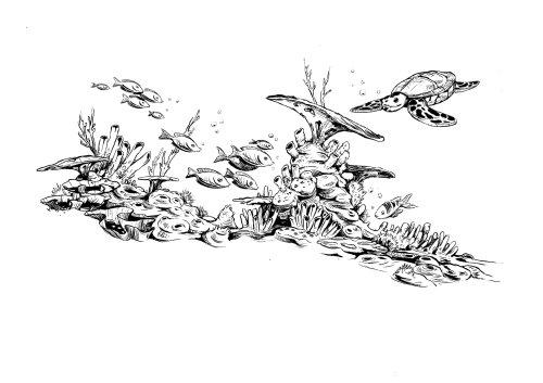 海洋生物的黑白插图