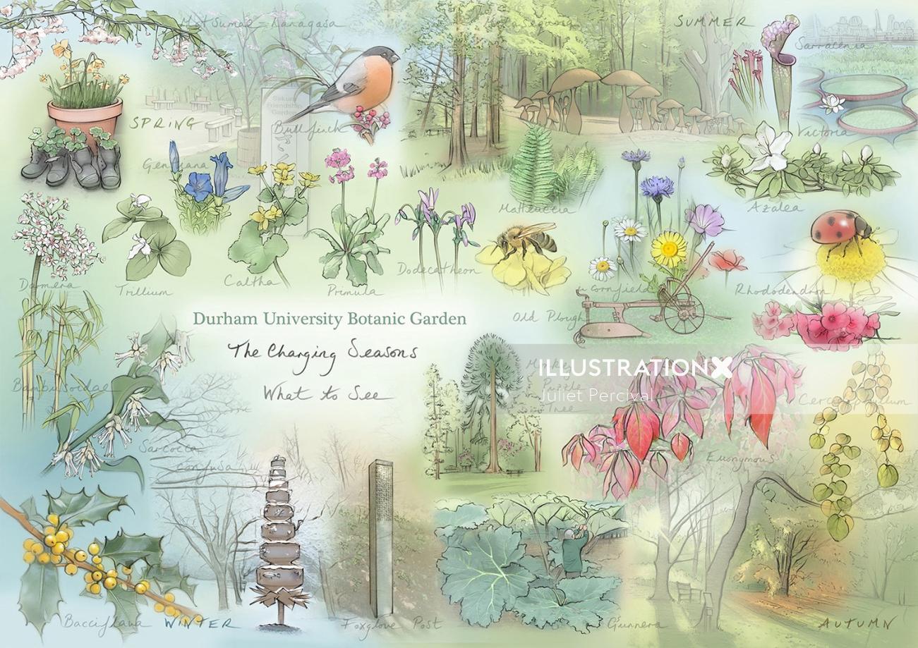 seasons, bullfinch, Azalea, ladybird,  flowers,  fauna, primula, butterfly
