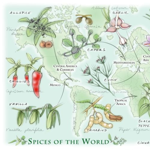 world map, spices, traditional, hand drawn,