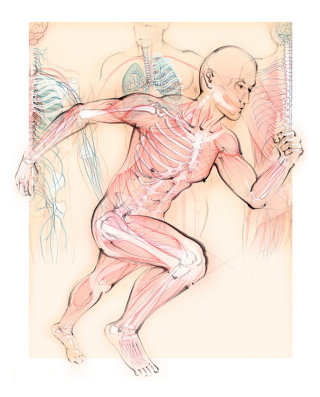 anatomy, running man, muscles, skeleton, bones, runner