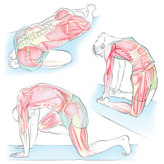 yoga, health, anatomy, camel pose, exercise, muscles