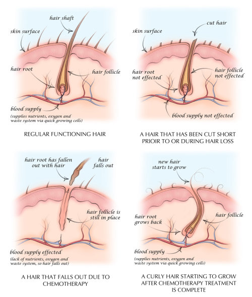 hair follicle, anatomy, hair growth, hair shaft, hair root