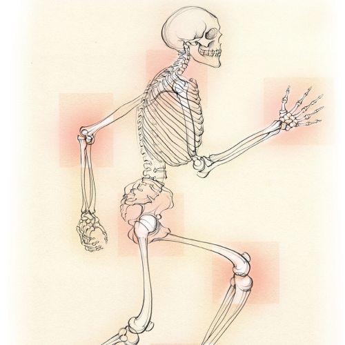 medical, anatomy, skeleton, osteoarthritis, joints