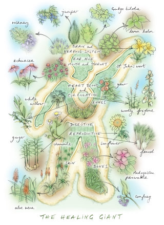 plant display, kew, herbs, natural medicine, garden, plants, flowers, landscape architecture