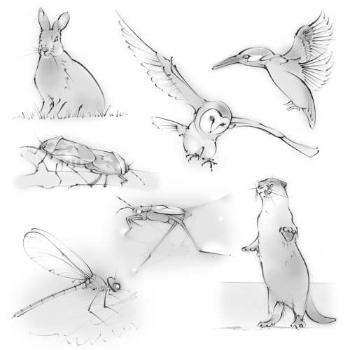 wildlife, wild animals, hare, owl, kingfisher, otter, dragonfly, pond skater