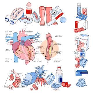 health, diet, sport, heart, drugs, medication, food, gardening