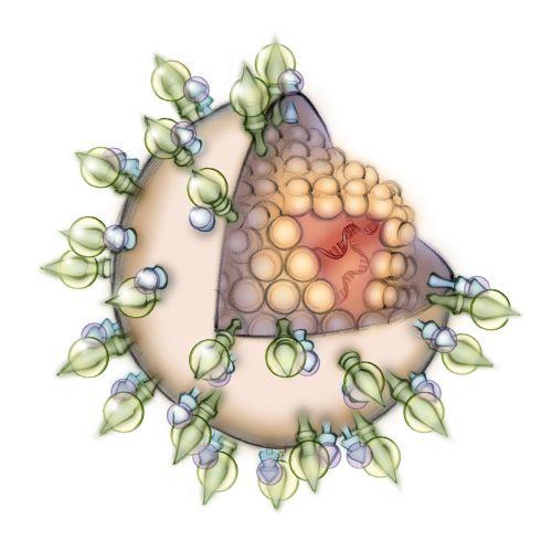 immunology, anatomy, medical, molecule, virus