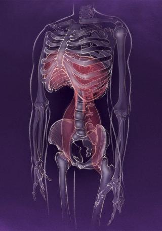 Anatomy, diaphragm, skeleton, psoas, yoga, calm