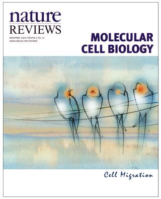 swallows, birds, migration, magazine cover, editorial