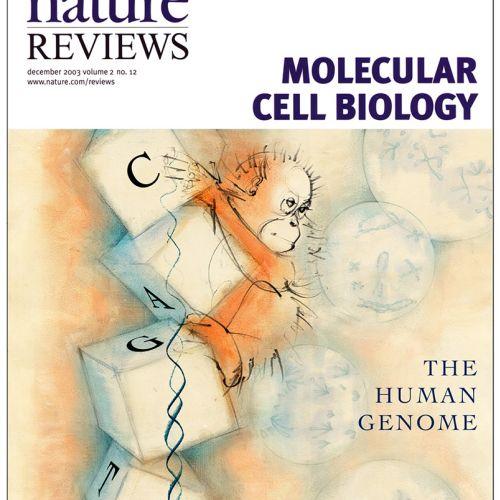 DNA, human genome, genes, cell biology, building blocks, genetics