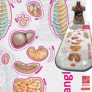 interactive infographic, human anatomy, ribs, liver, stomach, kidney