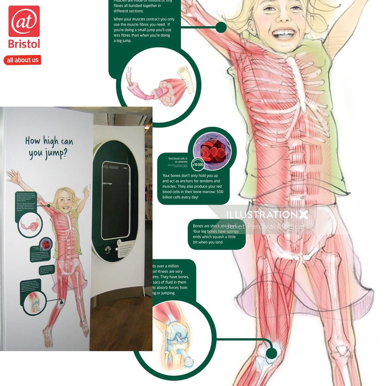 anatomy, medical, skeleton, muscles., girl, jumping, infographic