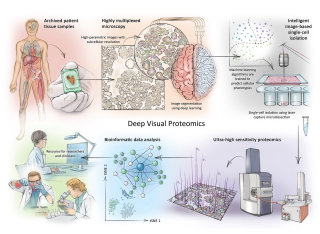 brain, histology, mass spectrometry, research, laboratory, microscopy, protein analysis