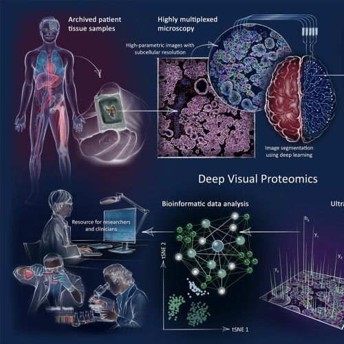 brain, histology, mass spectrometry, research, laboratory, microscopy, protein analysis