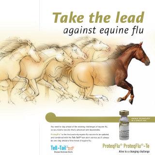 equine, racing horses, advertising