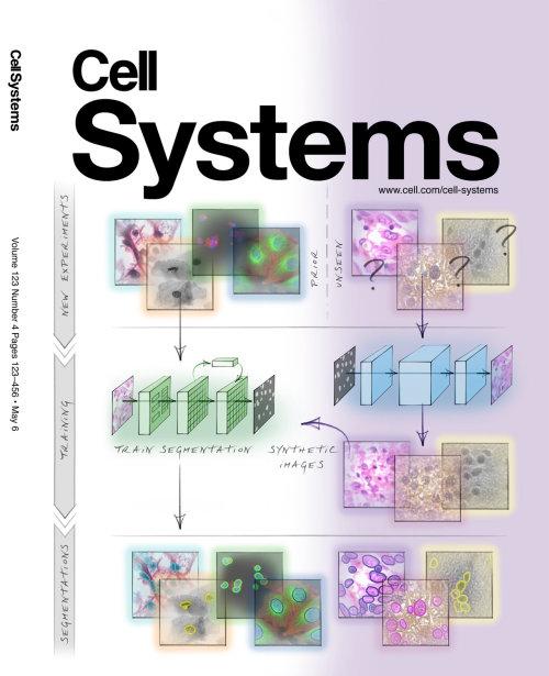 histología, células, anatomía, segmentación, investigación, ciencia