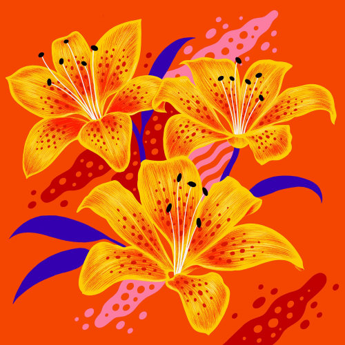 Tigerlily flowers with vibrant colours & graphic textures.
