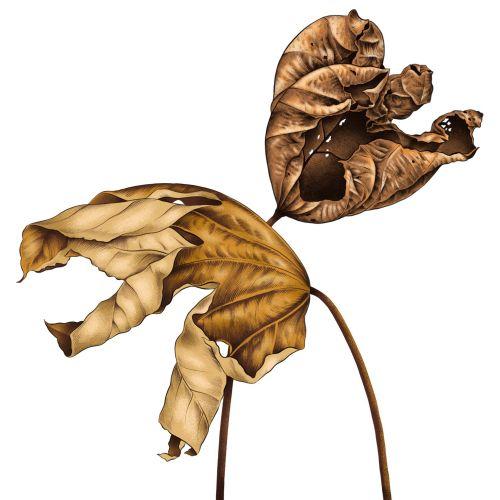Fall Leaves Realistic art by Jyotirmayee Patra