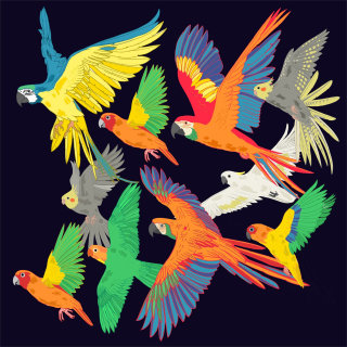 An illustration of a flock of Macaw parrots