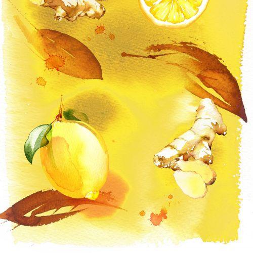Lemon ginger watercolor illustration